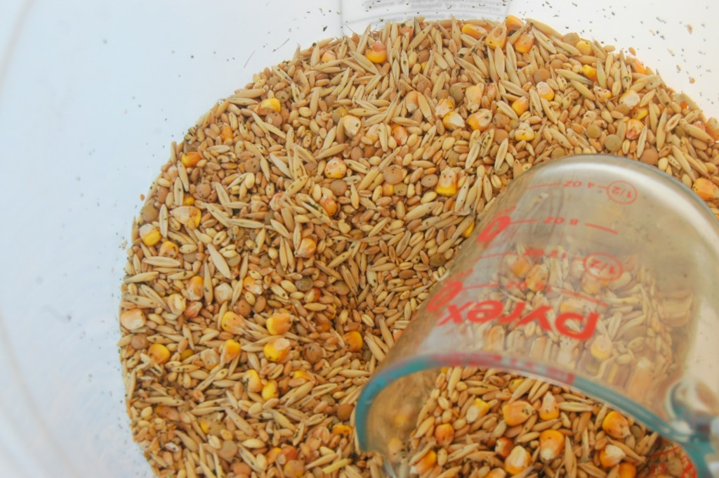 Homemade Chicken Feed. Organic and soy